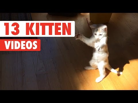 Funny Cat Video Compilation 2017  - Funny Kittens - Funny Videos