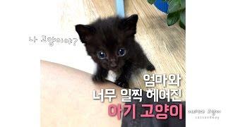 새끼고양이의 엄마가 되었다 Raising a kitten