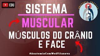 Músculos da Cabeça: Crânio e Face