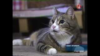 В Санкт-Петербурге отметили День эрмитажного кота