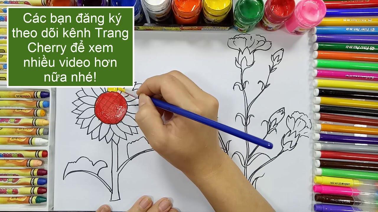 Vẽ và tô màu bông hoa hướng dương và bông hoa cẩm chướng   Trang cherry