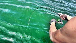船で1時間沖に出て釣りをしていたら・・・