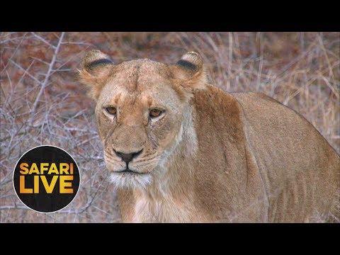 safariLIVE - Sunset Safari - August 28, 2018