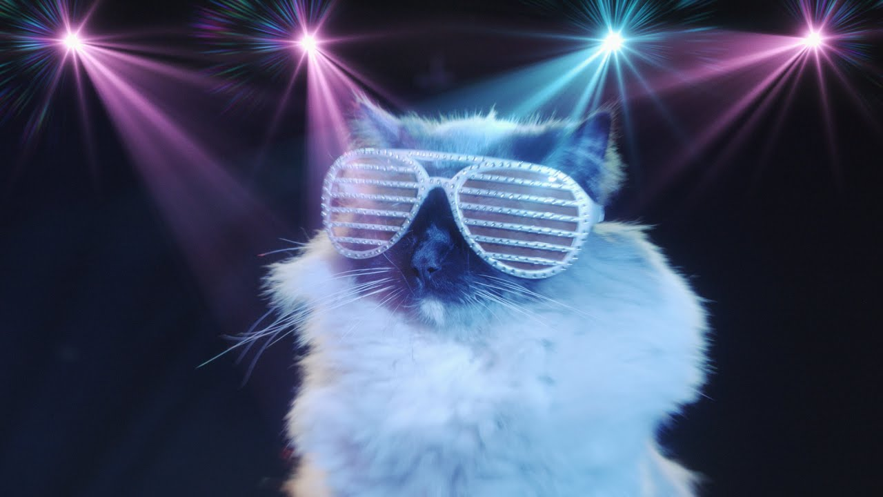 Share Some Dance Moves With Valentines Disco Cat YouTube