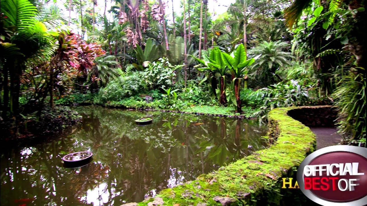 Hawaii Tropical Botanical Garden   Best Botanical Garden   Hawaii 2013    YouTube