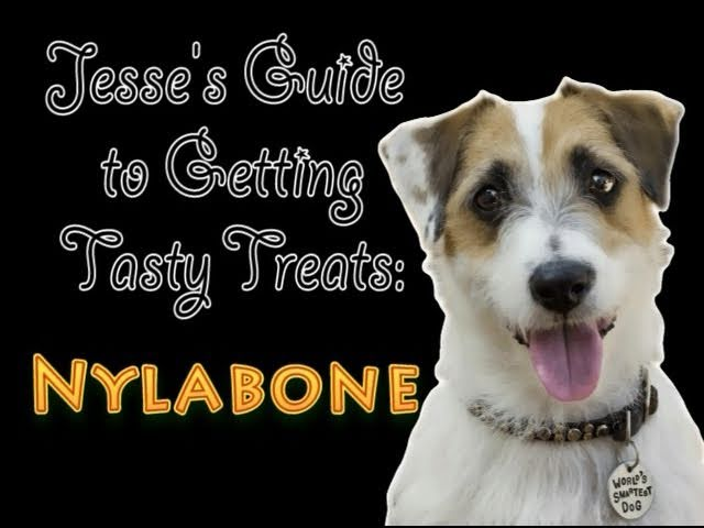 Jesse's Guide to Getting Tasty Treats: Nylabone