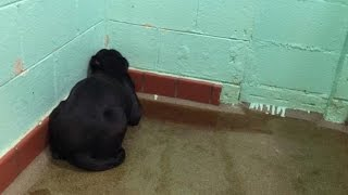 Why This Dog Curled Herself Up In A Corner And Stared At A Blank Wall
