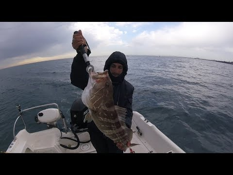 Cernia Bianca con seppia – Pesca a traina con il vivo