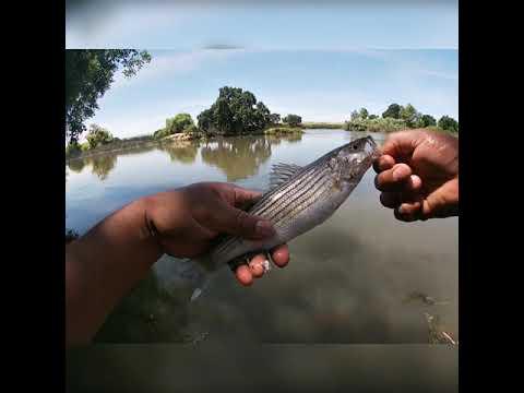 Bank Fishing Tracy Ca