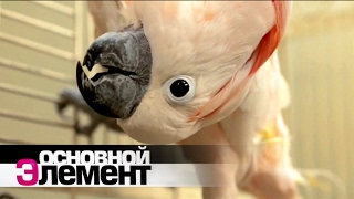 Как понять язык животных | Основной элемент