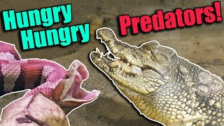 Feeding the PREDATORS at the RAD Zoo! (with Clint's Reptiles!)