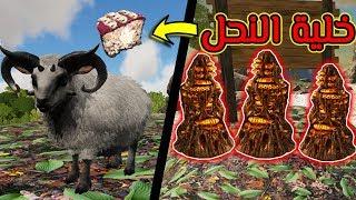 أرك سيرفايفل #7 | ترويض ملكة النحل والخروف! Ark Survival Evolved