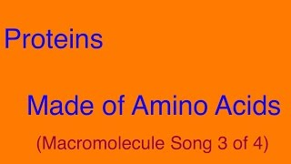 Proteins (Made of Amino Acids) - Macromolecule Song 3 of 4