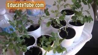 Diy Seed Germination Micro Greenhouse Indoor For Growing Organic Food