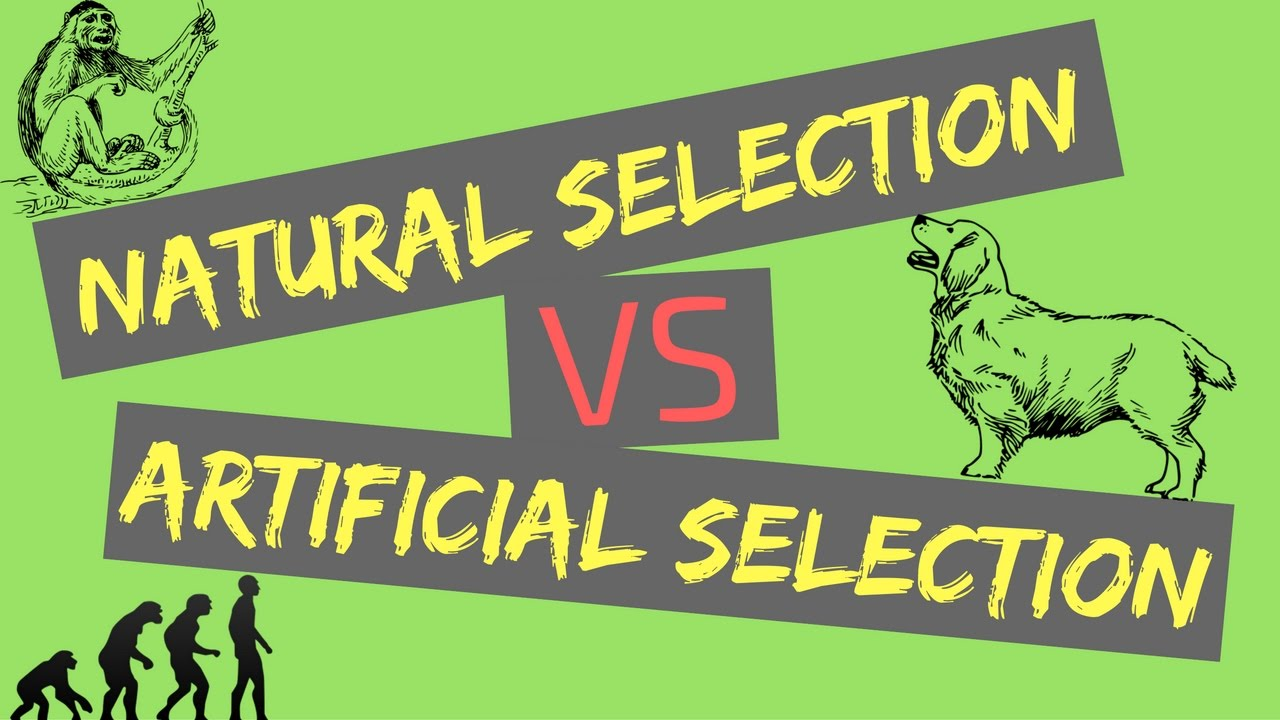 Natural Selection Vs Artificial Selection Mechanisms Of - 23 examples natural selection work