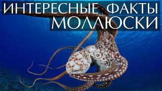Моллюски - интересные факты