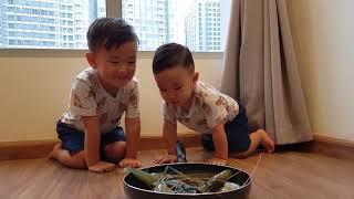베트남 호치민 징거미새우를 처음 본 시훈이랑 시호, Em bé Hàn Quốc