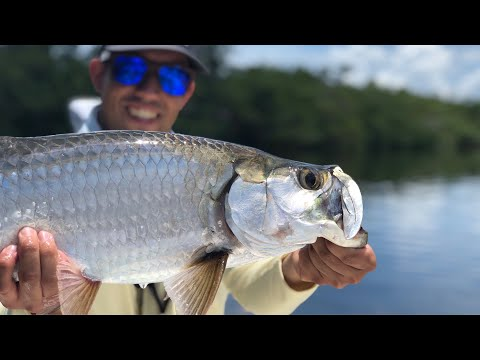 Saltwater Canal Tarpon Fishing !!! SW Florida Inshore Fishing - Canal Tarpon Action