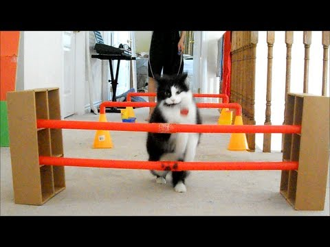 Cat Agility, CASHMERE TRICKS AND  TARGET TRAINING !!!