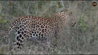 Pt 2 Safari Live's Sunset Safari Drive at 5:00 PM on May 04, 2018 ( Hukumuri )