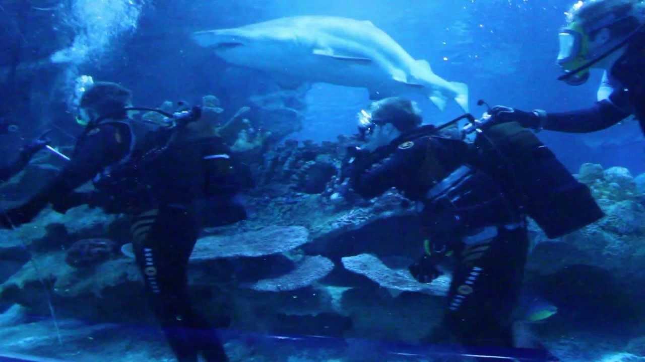 Blue planet shark dive november 2011 youtube for Dive planet