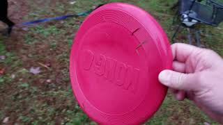 Chloe plays with the soccer ball and Kong frisbee