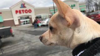 Shop With Me And My Dog At Petco