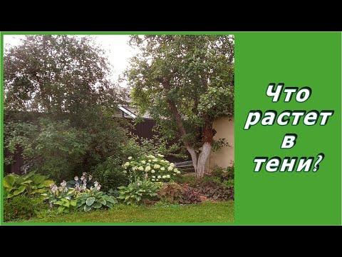 Вопрос: Что посадить в тенистый угол сада?