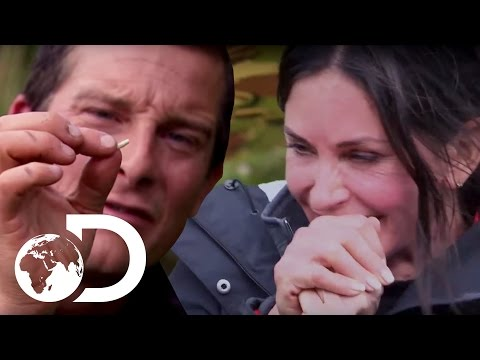 Courteney Cox Eating Maggots! | Running Wild with Bear Grylls
