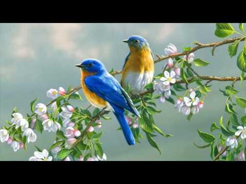 Love Birds Wallpaper Animated