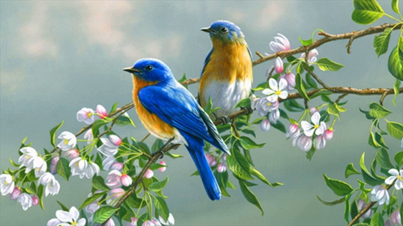 Love Birds Wallpaper Animated - YouTube