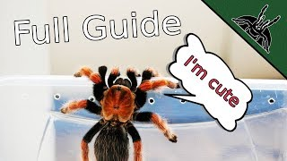 How to TARANTULA? Complete beginner guide 101