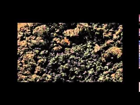 Fenmenos fsicos qumicos y biolgicos  YouTube