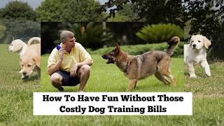 How To Have Fun Without Those Costly Dog Training Bills