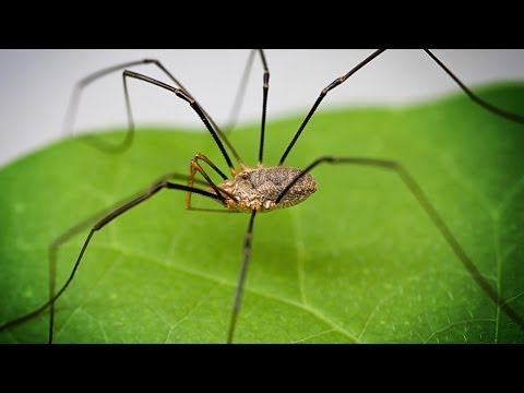 The DADDY LONGLEGS' Secret Fatality Move Discovered