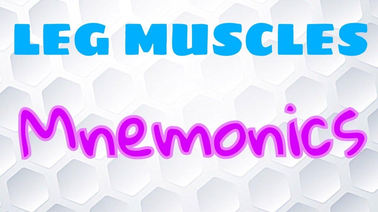 Mnemonic For Leg Muscles Youtube