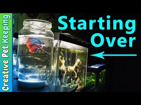 How to clean a 5 gallon BETTA FISH tank   #BettaFishCare