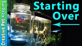 how to clean a 5 gallon betta fish tank   bettafishcare