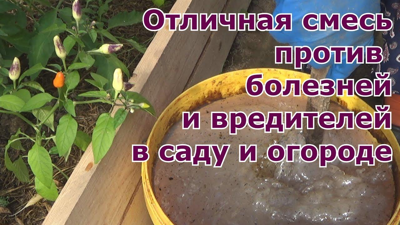 Отличная смесь против вредителей и болезней сада и огорода