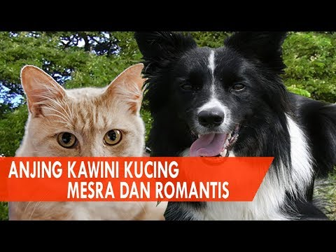 Seru, Kucing Kawin Sama Anjing - Romantis! Anjing Kawini Kucing