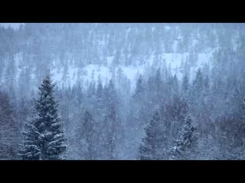 Heavy snowfall over a forest