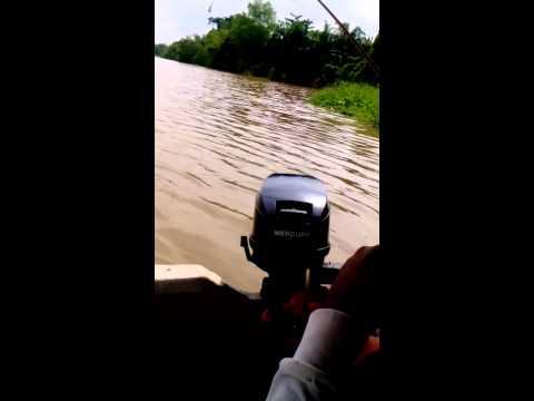 Udang galah sungai Perak