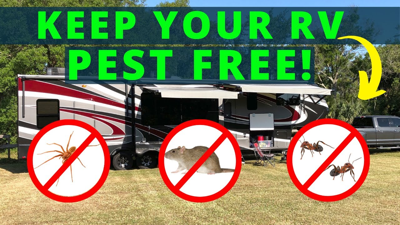 RV Pest Control (Avoid Rodents / Bugs / Spiders)!