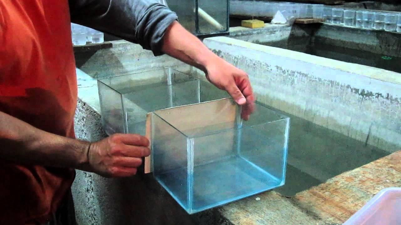 Equipo para criar peces betta ii youtube for Como hacer un criadero de carpas