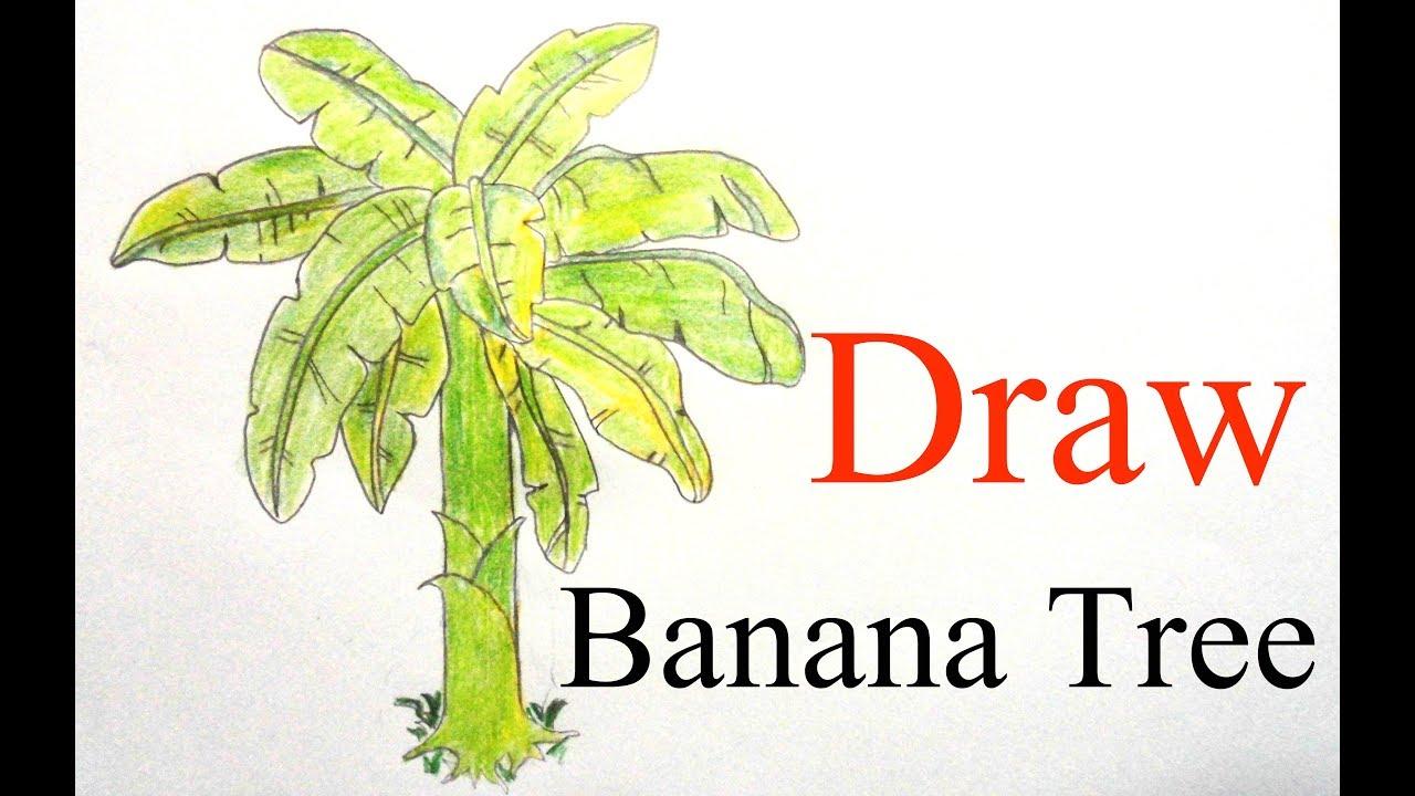 Uncategorized How To Draw A Banana Tree how to draw banana tree step by very easy youtube easy