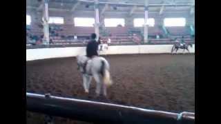 William Axl Rose For Sale - See Dream Horse Spotlight Add