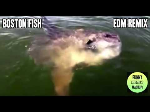 Boston fish EDM remix mash up