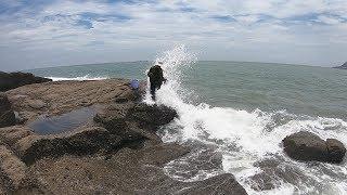 大退潮赶海就是爽,遍地小海鲜没人捡,还遇到两只像蜗牛的大螺