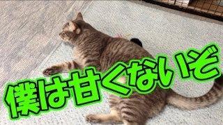猫動画 SNP106・確実に猫が喜ぶおもちゃVS無視が得意な猫