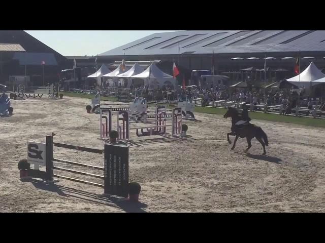 Belano VD Wijnhoeve 1st place CSI3 GP Moorsele